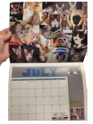 12 Month Photo Calendar 11